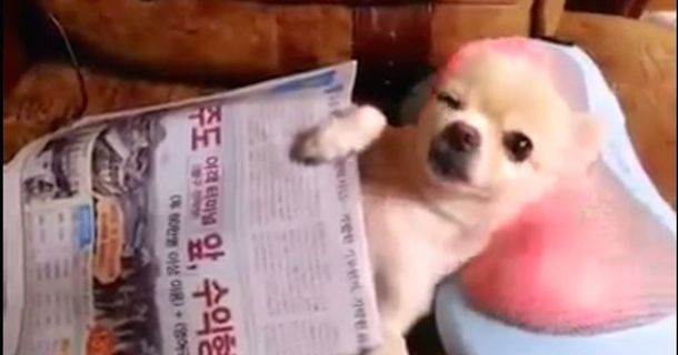 This Blissed-Out Spa Puppy Is Taking Over The Internet